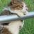 マユキ さんのプロフィール写真