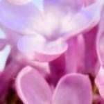 青山藍明 のプロフィール写真